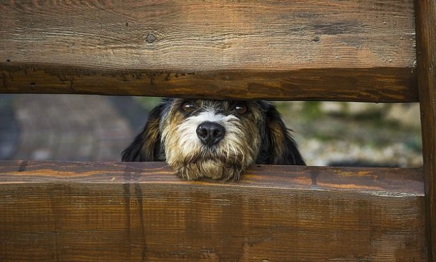 Un cane, un recinto e la giusta altezza