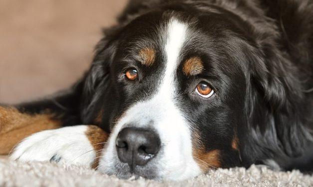 Dare il tuo cane al rifugio: quello che dovresti considerare