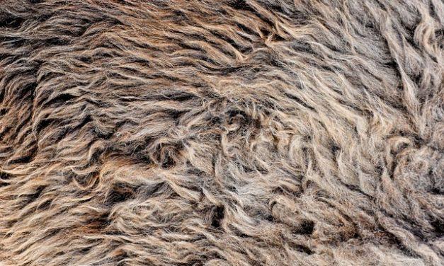 Ottenere capelli spessi: questi rimedi rafforzano i capelli