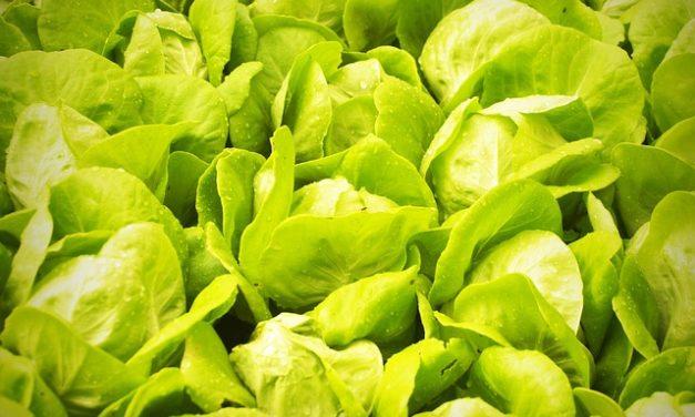 Piantare verdure invernali: è così che funziona in serra