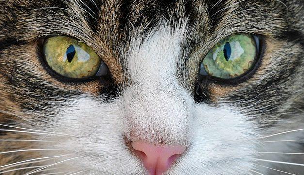 Quando i gatti starnuto: ecco come aiutare