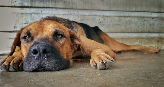Anatomia della zampa di un cane: facile da capire per i laici