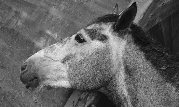 Come mantenere pulita la cassa dei cavalli