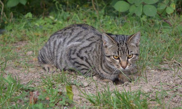 Corsa nei gatti: rileva i segni e aiuta rapidamente