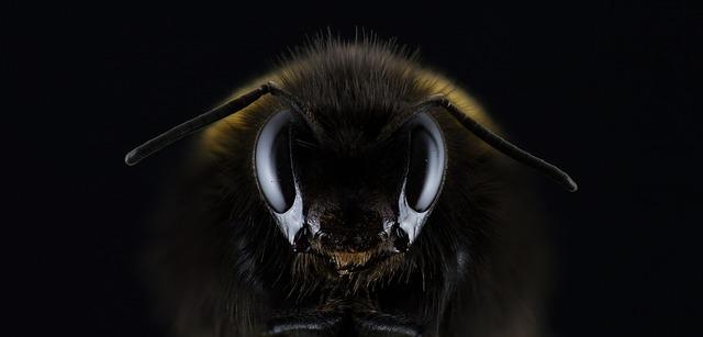 Forniture apicoltura Geller: Informativo