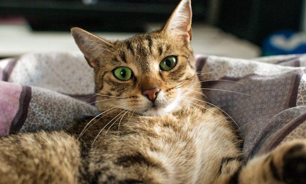 Il tuo gatto morde i piedi: è così che puoi correggerlo