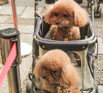 Stitichezza del cane: questo è il modo in cui puoi aiutare il tuo animale domestico