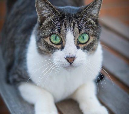 Allevamento di gatti bebè: come renderli adatti alle specie