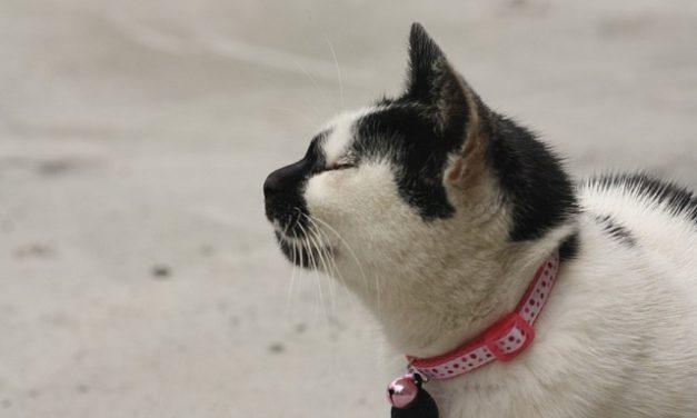 Come utilizzare correttamente il collare GPS per i gatti