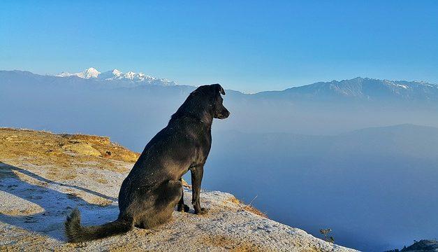 Cosa fare se il cane starnutisce?