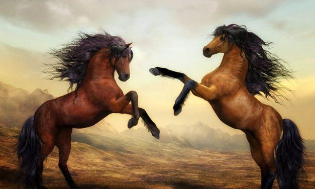 Gambe scuotere a cavallo: questo è quello che si può fare