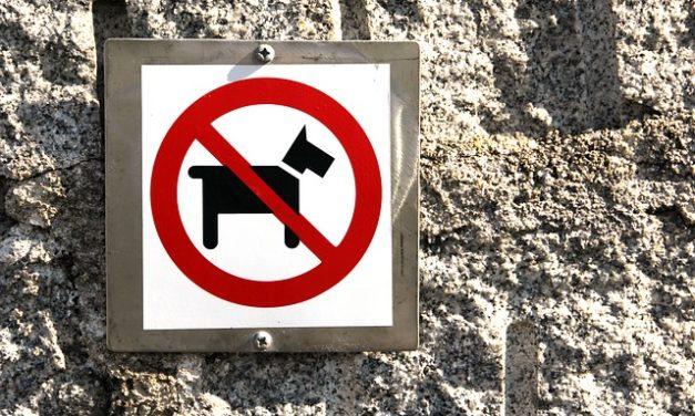 Insegnare l'insegnamento proprio animale domestico del tuo cane per utilizzare il cane toilette