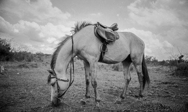 Con l'affluenza al gambo del cavallo: dare aiuto