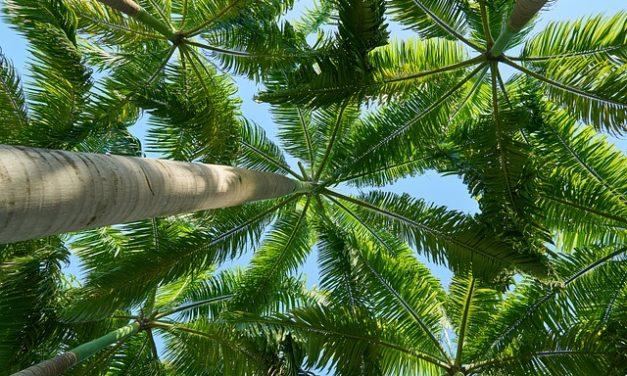 Mettere le piante sotto i riflettori: bisogna fare attenzione a questo