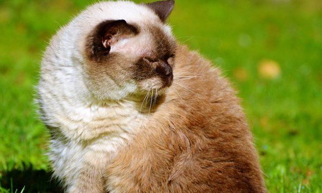 Ai gatti piace dormire coccolone: è così che si costruisce una grotta di gatti accogliente