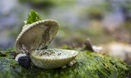 Grande fioritura di alghe nell'acquario: Suggerimenti per la rimozione e la prevenzione