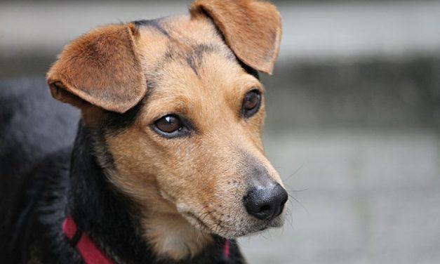 Lasciare scheggiare i cani: ecco cosa tenere a mente