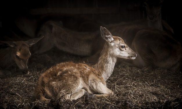 Neonati coniglio: allevamento e cura