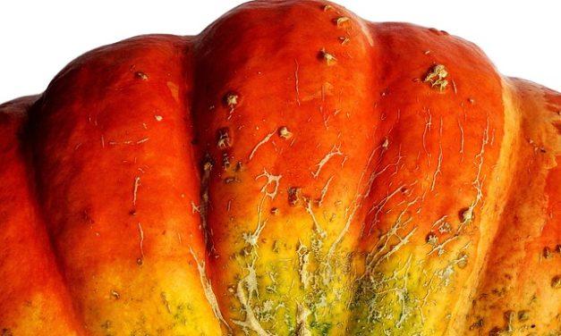 Agente efficace contro i brufoli: è così che Aloe Vera migliora lo stato della pelle