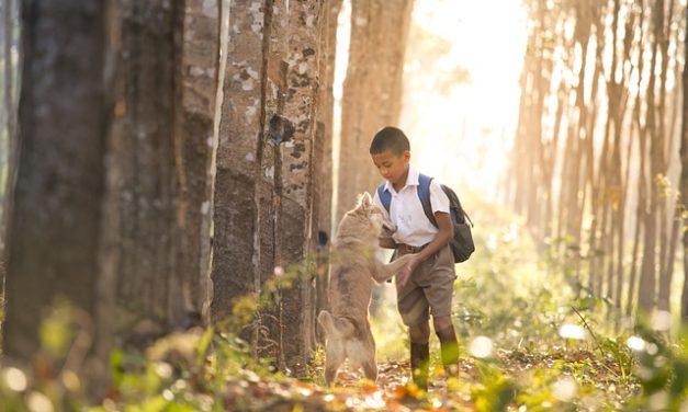 Apertura di una scuola per cani: Suggerimenti