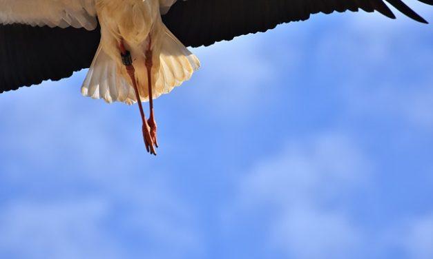 Impianto e cura del becco di cicogna