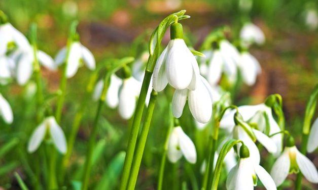 Prato nel mese di marzo: debitamente scarificante & cura del prato in marzo