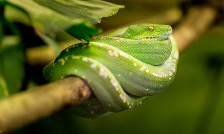 Acquisto di serpenti: Suggerimenti per tenere i serpenti