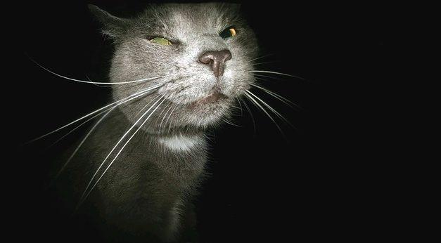 Cat è malato: cosa fare in caso di vomito?