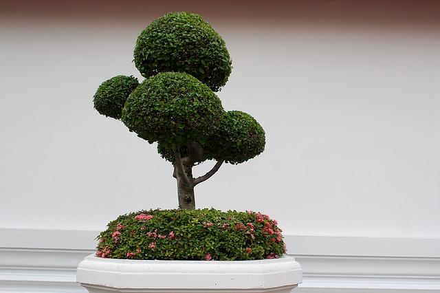 Rivivere i bonsai così è possibile salvare l impianto in