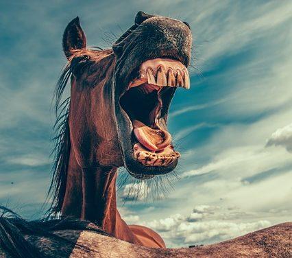 Uso corretto delle fruste da equitazione negli sport equestri