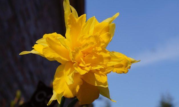 Attraversare fiori: è così che potete affinare le piante
