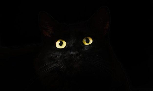 Grandi gatti domestici: cosa considerare quando si tiene il tuo animale domestico