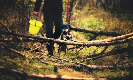 Yorkshire Terrier nella lettiera: come usarla correttamente