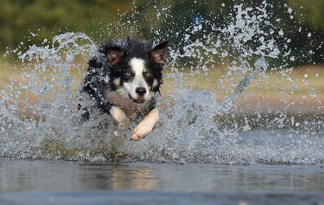 Collare per cani con elettricità: come denunciare la tortura animale