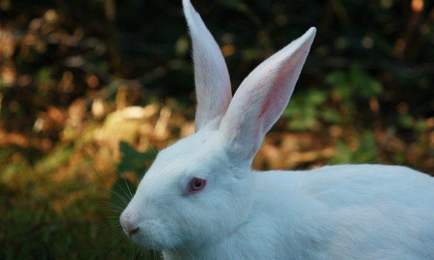 Costruisci il tuo recinto: è così che i tuoi conigli si sentono a casa
