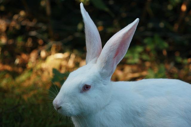 Costruisci il tuo recinto cos che i tuoi conigli si - Costruisci casa ...