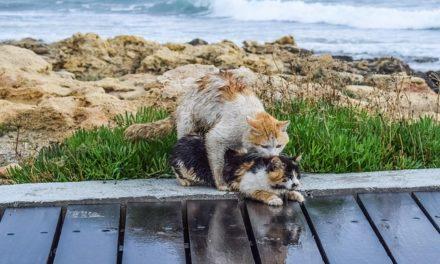 Determinare il sesso del gatto: procedere come segue