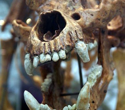 Quante ossa ha lo scheletro di un gatto?
