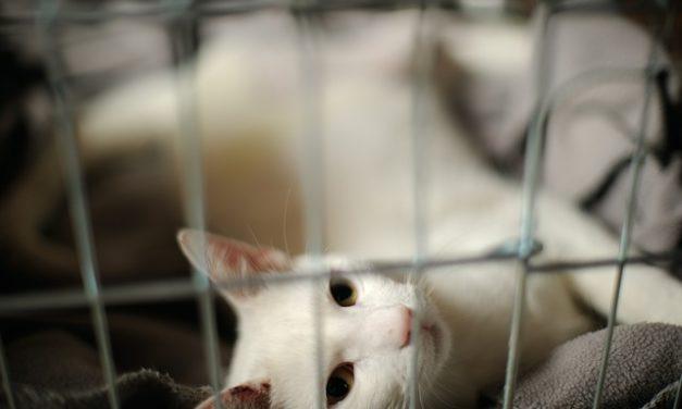 Alimenti per gatti affetti da malattie renali – come nutrire correttamente l'animale