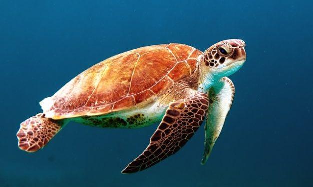Costruire il vostro proprio recinto tartaruga