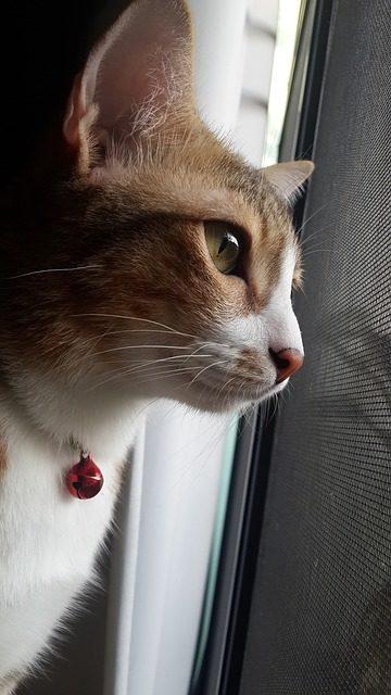 Eccezionali Nomi Di Gatti Maschi Così Il Nome Diventa Unico
