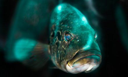 Equipaggiare un acquario con luce LED: è così che funziona