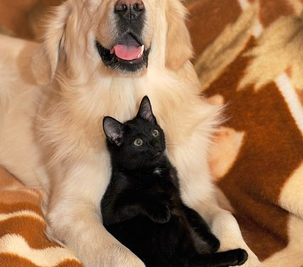 Tenere insieme cani e gatti: come funziona