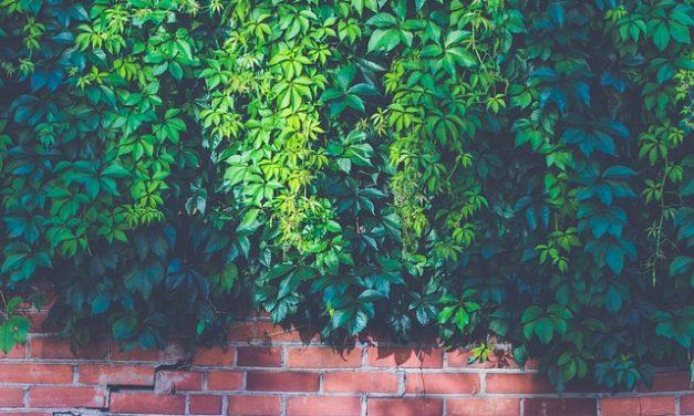 Verde un muro nel giardino