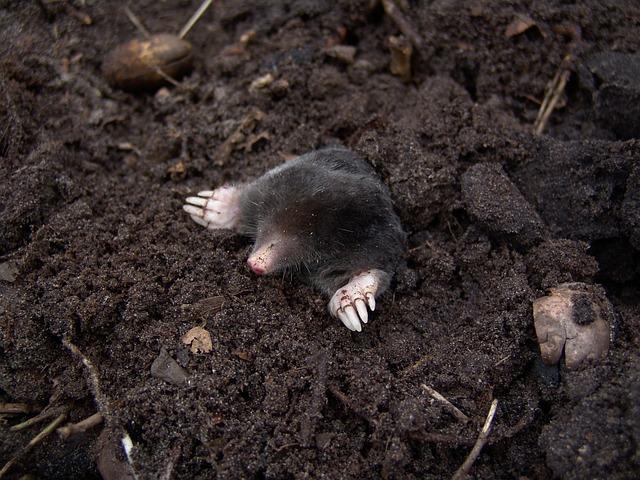 Anti-mole: come liberare il giardino