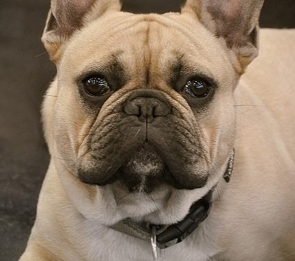 Come fermare l'abbaiare del cane: come addestrare il tuo cane