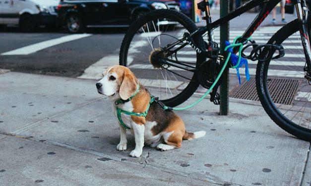 Insegnare al cucciolo a camminare per il cane: come riuscire
