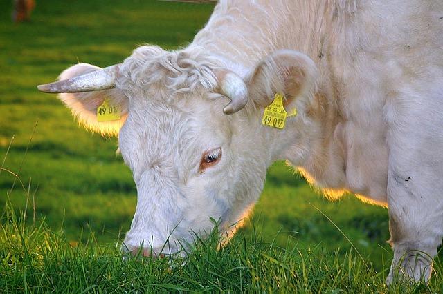 Allevamento di animali di massa: Pro e contro