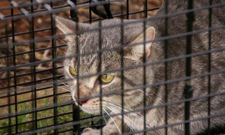 Cattrap: come utilizzare correttamente la trappola