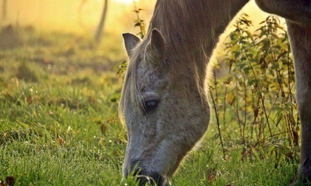 Combattere gli acari dell'erba nei cavalli: ecco come si procede